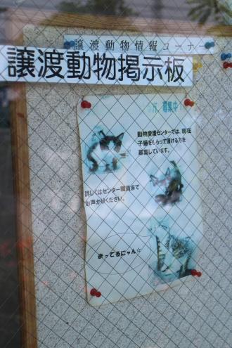 川崎市動物愛護センターの上と動物掲示板