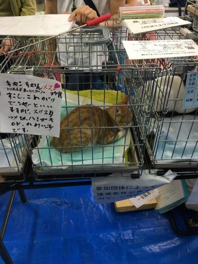 中原区役所での「動物愛護フェア」で実施された譲渡会