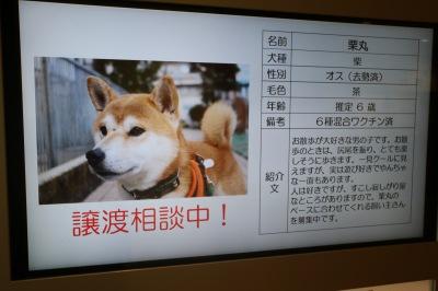 犬・猫の譲渡情報