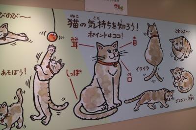 猫の気持ちを知ろう!
