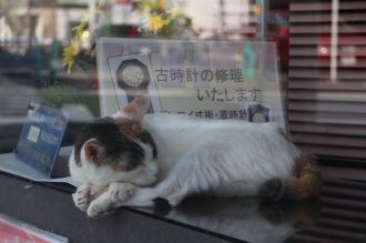 三毛猫「ミケタン」