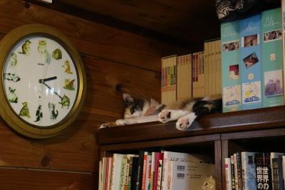 本棚の上の猫