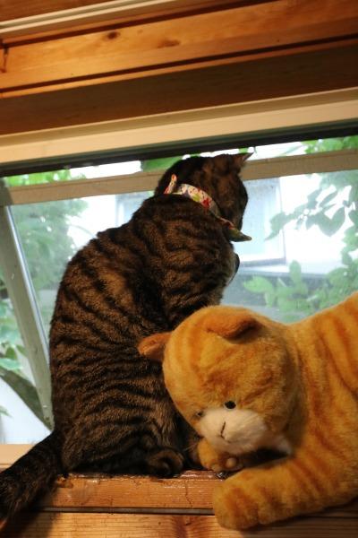天窓から外を覗く猫
