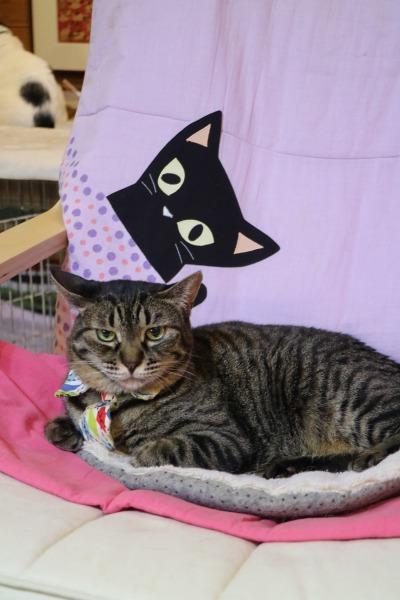 猫ソファでゆったり