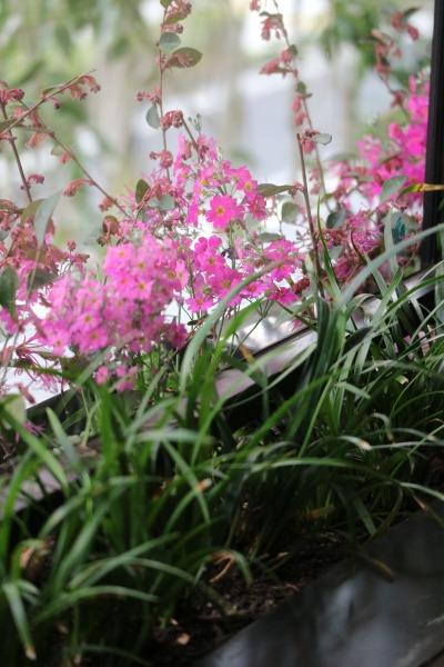 デッキに植えられた花
