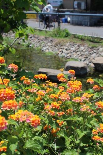 江川せせらぎ遊歩道の、初夏の花々