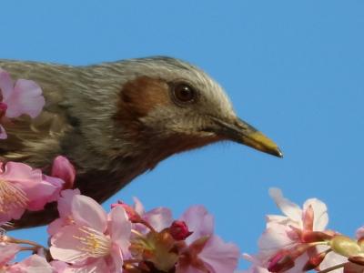 最初の鳥のくちばし
