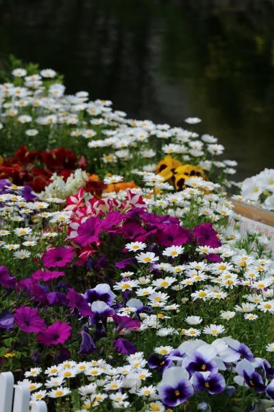地域の子供たちによる花壇