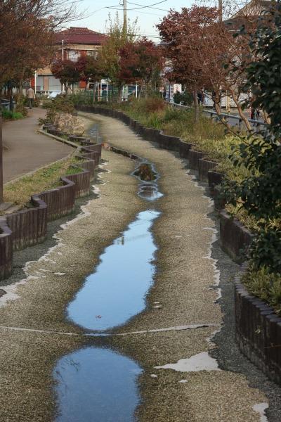 水がわずかに残った江川せせらぎ遊歩道