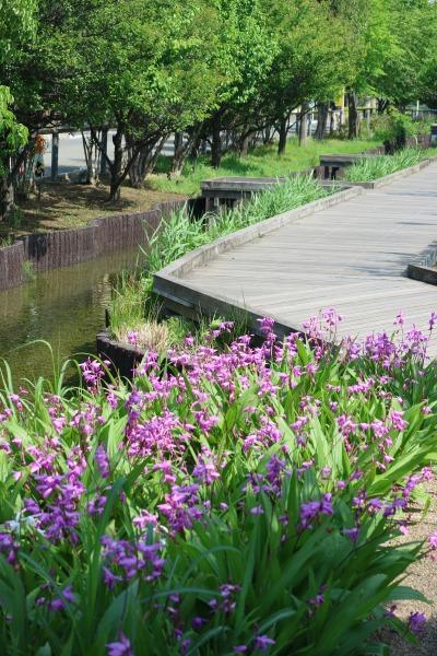 春の江川せせらぎ遊歩道