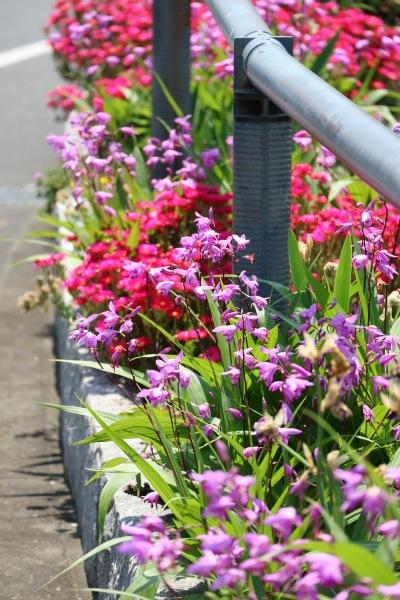 道路沿いの花