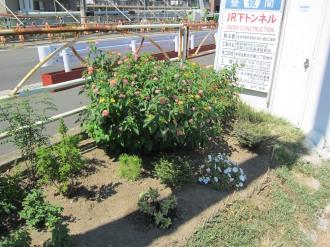 横須賀線武蔵小杉駅工事現場入口の花壇