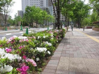 メイン会場となるパークシティ武蔵小杉前の道路