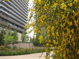 リエトコート武蔵小杉ゲート付近の黄色い花