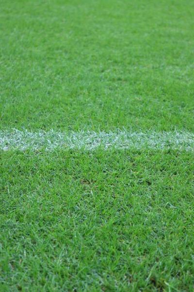 等々力陸上競技場の天然芝
