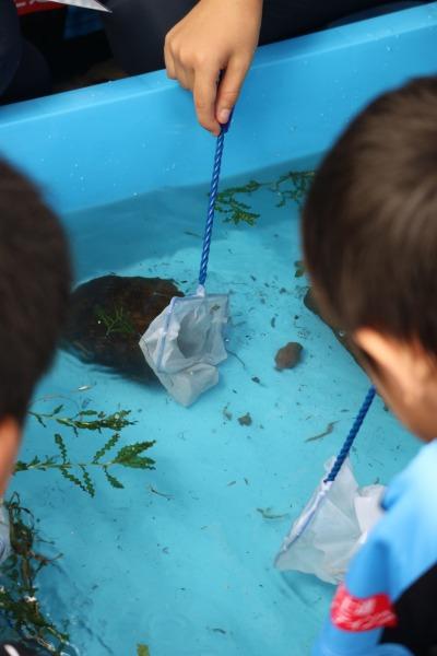 多摩川の水辺の生物観察