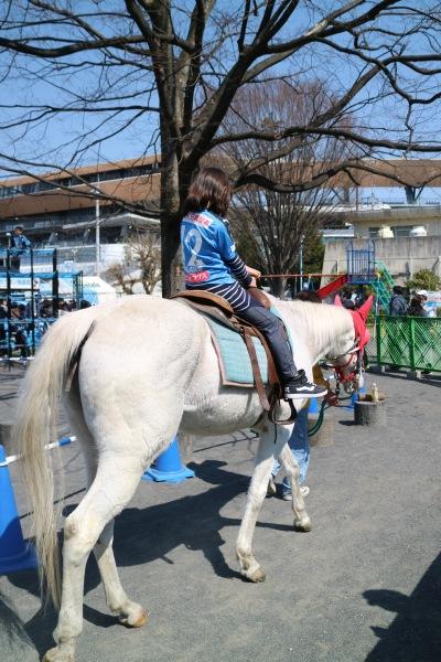 サラブレッドの乗馬体験