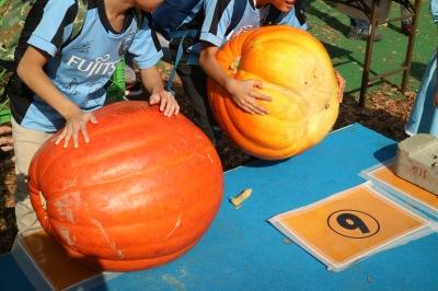 かぼちゃの重さ計測
