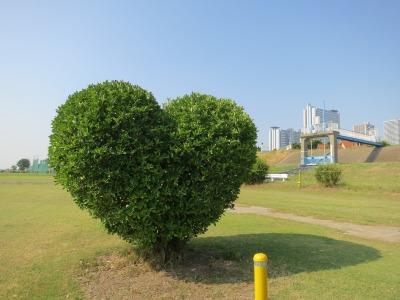 多摩川河川敷のハート型の木