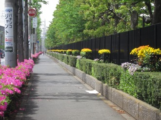 南部沿線道路のツツジと富士通の植栽
