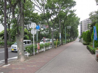 キヤノン本社の並木道