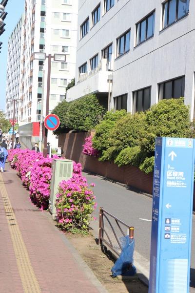 南武線沿いの歩道(植栽廃止前)