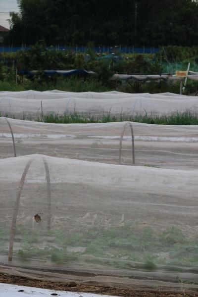 古川原農園