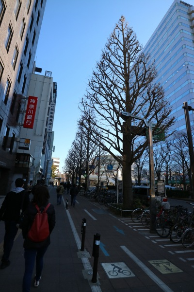 川崎市役所前の大通り