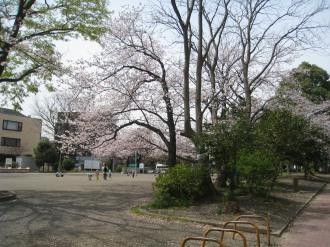 児童公園スペースの桜