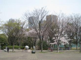 中原平和公園から見える武蔵小杉の再開発ビル