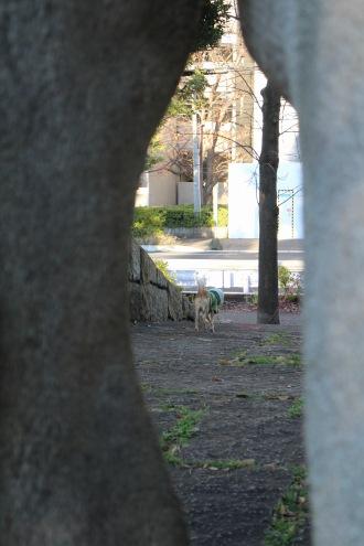 門の向こうに見える、犬の散歩