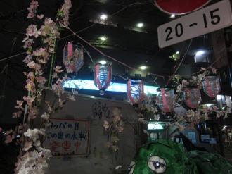 お花見の桜と提灯