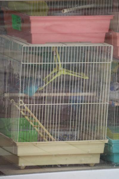 営業当時の森小鳥店
