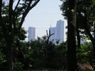 どんぐり広場から見える武蔵小杉のタワーマンション