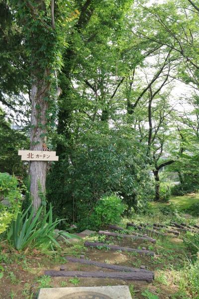 井田山の緑地