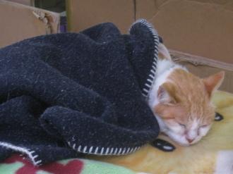 栄松堂の猫
