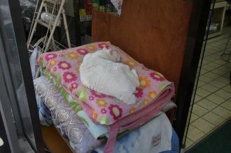 「永松堂」の看板猫