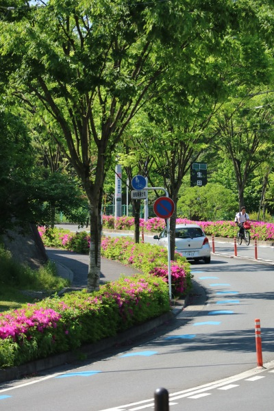 生田緑地周辺の道路