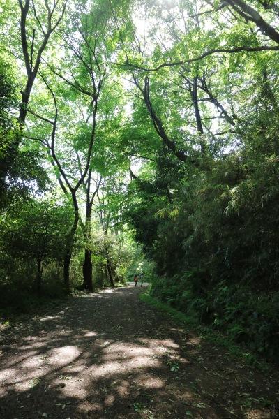 生田緑地に残された自然