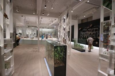 「かわさき宙と緑の科学館」の展示