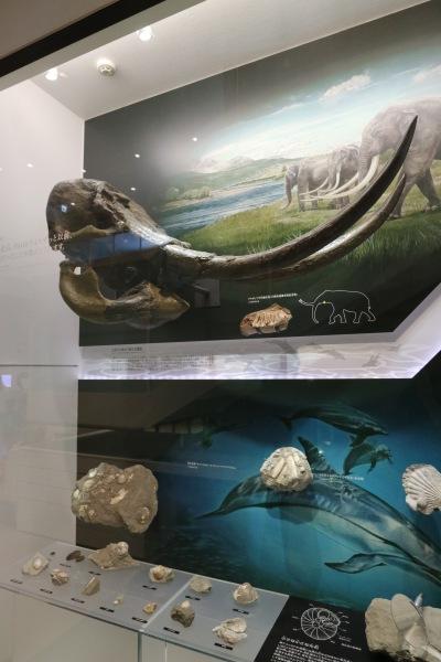 川崎市で発見された化石