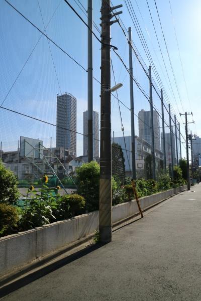 今井中学校のグラウンドと武蔵小杉のタワーマンション