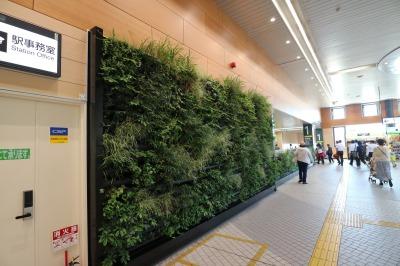 コンコースの壁面緑化デザイン