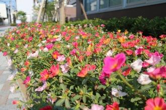 遊歩道の花壇