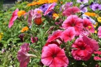 江川せせらぎ遊歩道の花壇の花