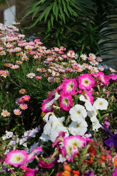 江川せせらぎ遊歩道の花々