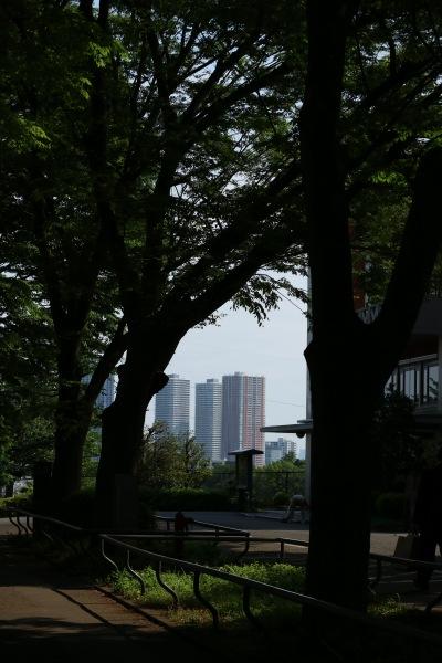 日吉キャンパスの並木道と、武蔵小杉のタワーマンション