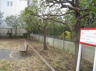 手入れされた樹木(作業後)