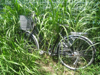フェンス際の自転車