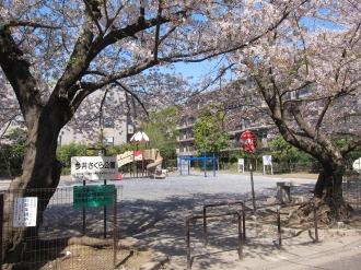今井さくら公園